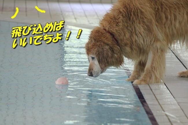 0724りんちゃんマックスくんお水の日 074