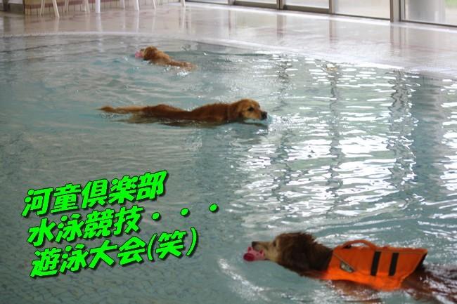 0724りんちゃんマックスくんお水の日 058