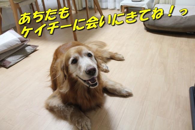 TV鑑賞新聞 029