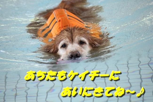 0724りんちゃんマックスくんお水の日 087
