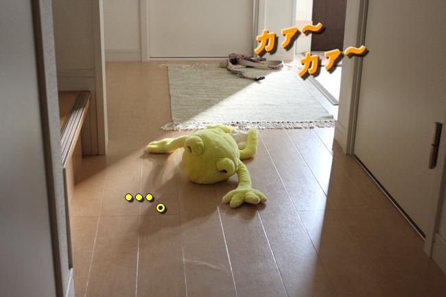 カエル芋エアコン直下 004
