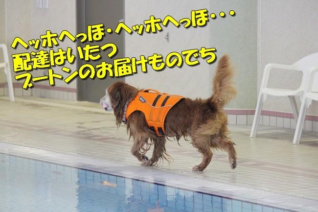 木曜プールモモちゃんフィオナちゃん 046