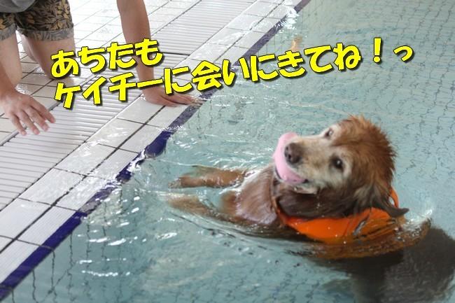 木曜プールモモちゃんフィオナちゃん 107