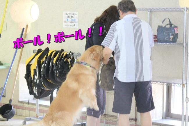 木曜プールモモちゃんフィオナちゃん 176