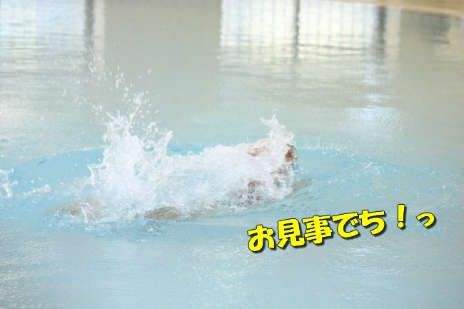木曜プールモモちゃんフィオナちゃん 196