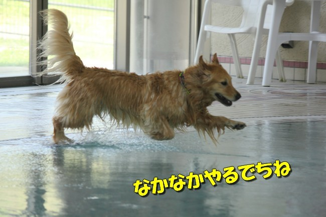 木曜プールモモちゃんフィオナちゃん 206