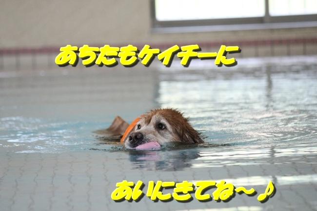 木曜プールモモちゃんフィオナちゃん 086