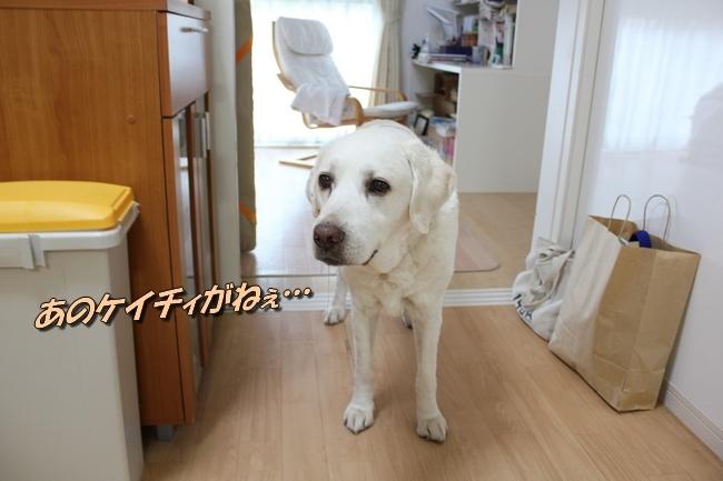 ケイチー足 サービスドッグメンバー 018