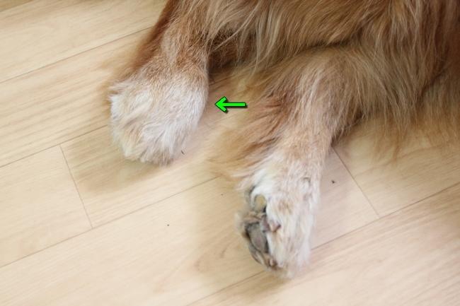 サム家と足の腫れ 004