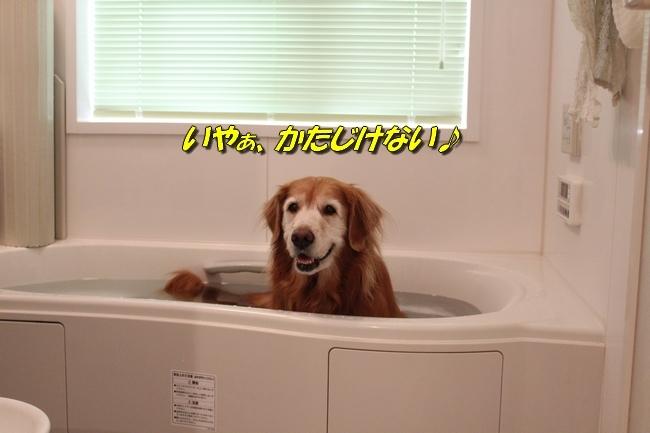 入浴ドライヤー 001