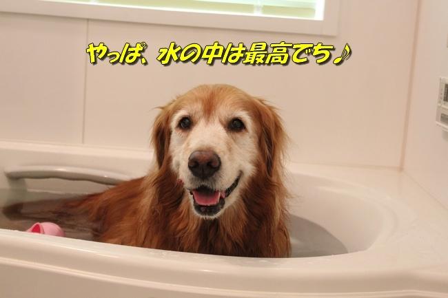 入浴ドライヤー 020
