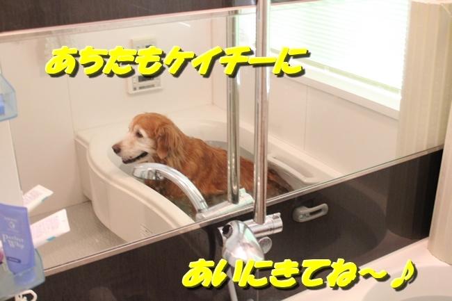 入浴ドライヤー 006