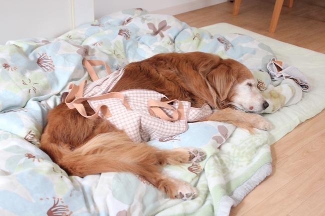 寝顔とTV 001