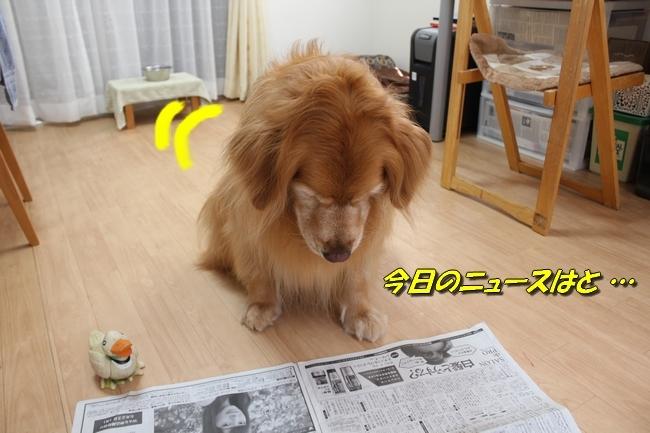 阪神新聞 0112