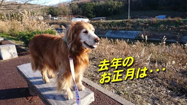 2019お正月散歩2