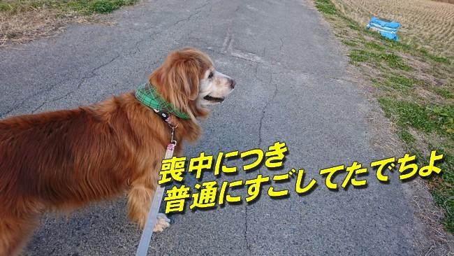 2019お正月散歩3