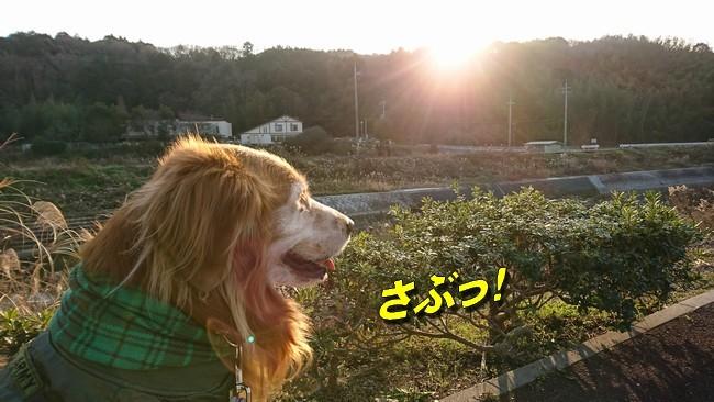 2019お正月散歩4