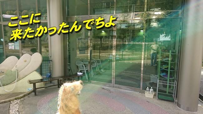 犬かきの館2