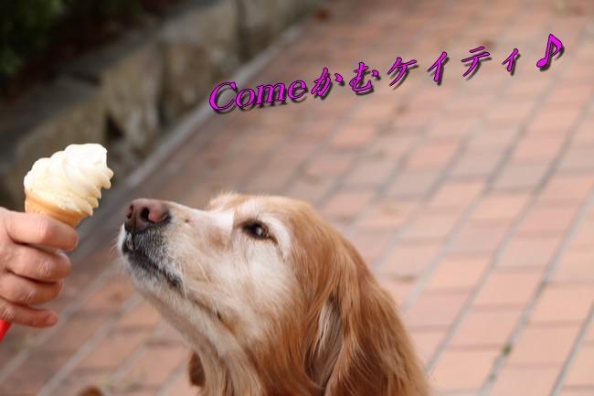 明石公園桜2018 021