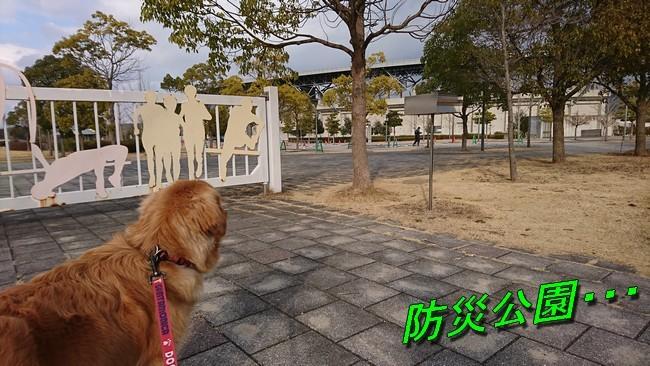 防災公園2020208 033