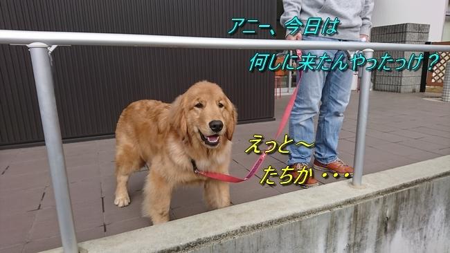 アニーモデナHPLと大蔵海岸2020129 010