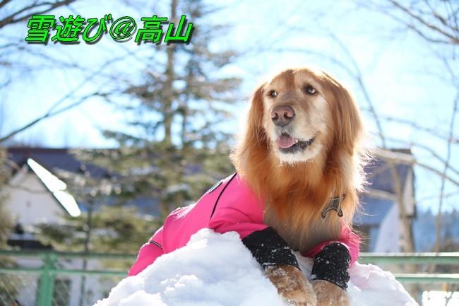 雪遊び2016 ケイティ