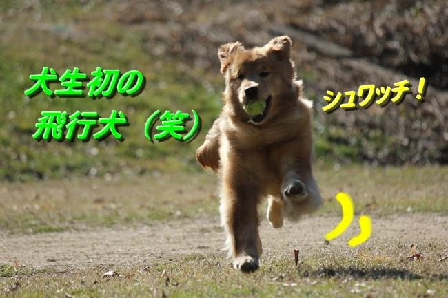 IMG_7334.jpg