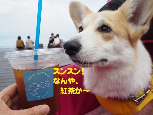 13紅茶か