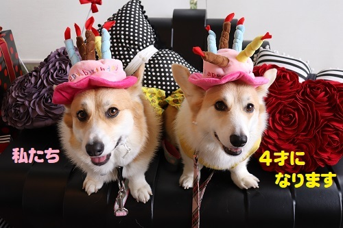 33私たち美犬