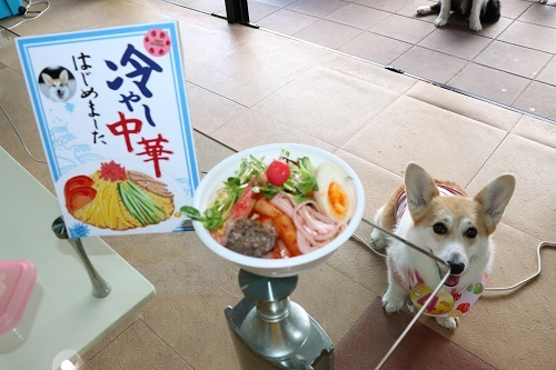 16冷麺と芹ちゃん