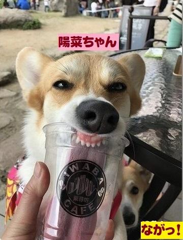 7陽菜ちゃんの舌