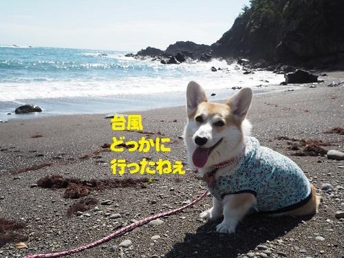 51台風どっかに