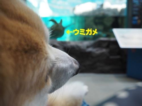 2ウミガメ