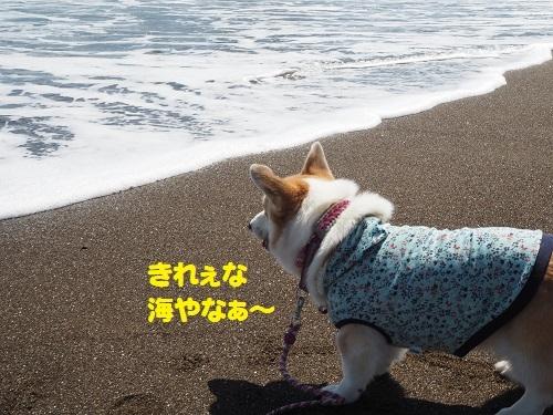 8きれえな海
