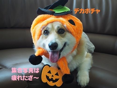 49でかぼちゃ