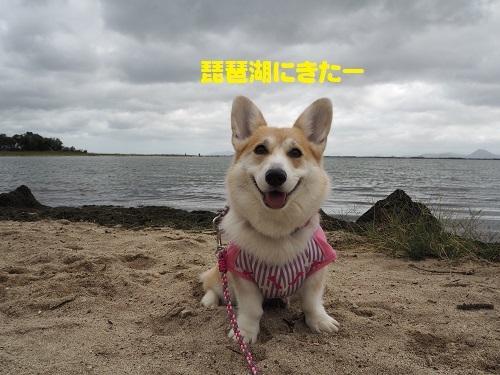 2琵琶湖にきた