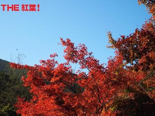 10紅葉や
