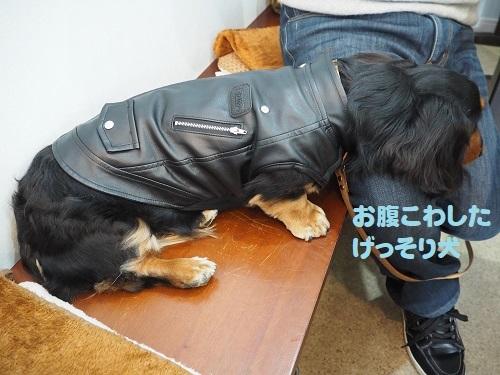 14げっそり犬