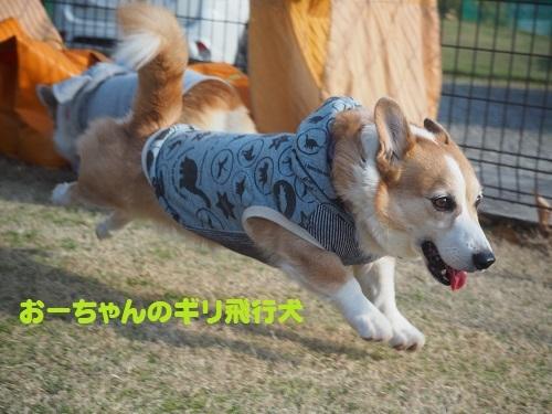 25ギリギリ飛行犬