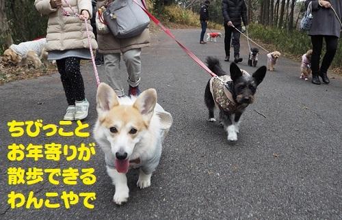 3お散歩できる