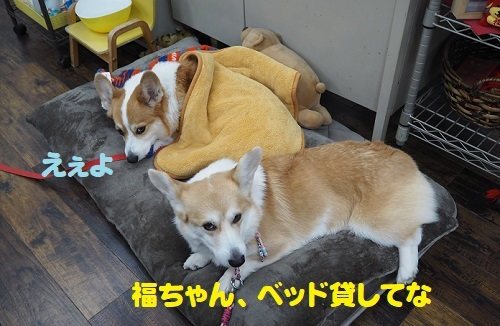 2ベッド貸して