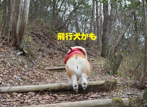 24飛行犬