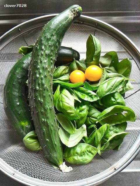 20190712_155107_家庭菜園_バジル、キュウリ、トマト
