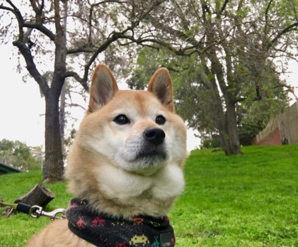 みなの安全を願う犬1