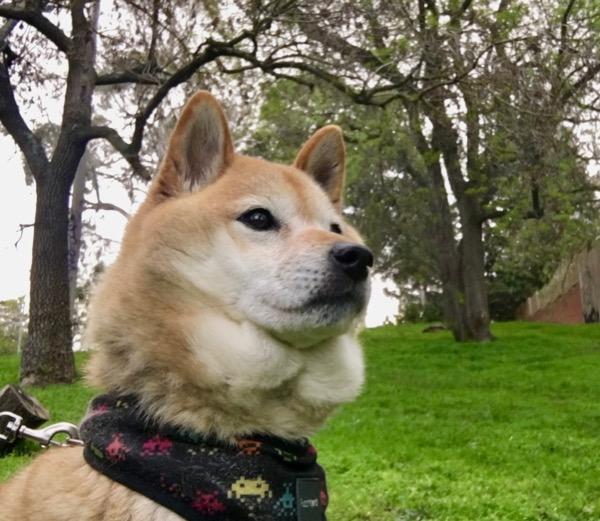 みなの安全を願う犬2