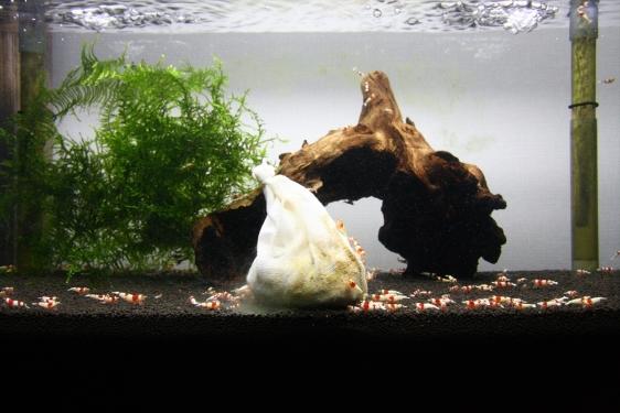 shrimp cafe_2279
