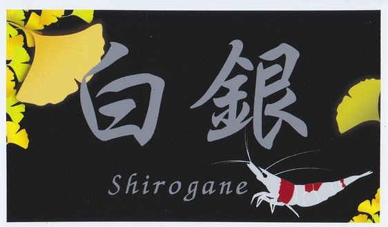 shrimp cafe_2311