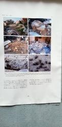 川崎市ふれあい館に向かう細い道に貼ってある、電波ゆんゆんの掲示群(4)