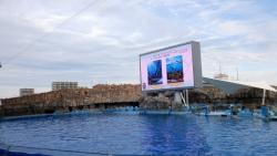 日本最大のイルカショープール