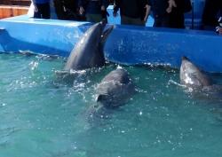 イルカとの触れ合い教室